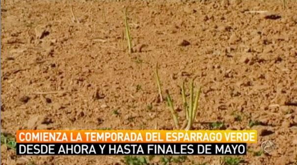 Espárragos de Aranjuez en Antena 3