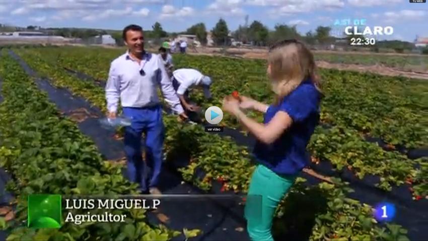 Fresas y fresones, huerta de Luis Miguel Peñafiel